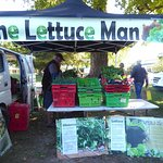 Never knew so much about lettuce!