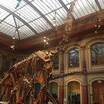 #FelixTravelers #Alemania #Berlín #NaturalHistoryMuseum