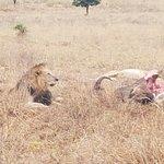 Photo of African Game Trek Safaris - Day Tours