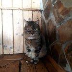 Cat watching me eating :)