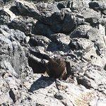 Foto de Pohatu Penguin Habitat