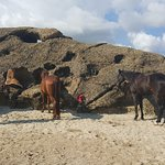 Photo of Rancho Washikemba horse ranch Bonaire