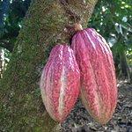 Foto de El Sendero del Cacao