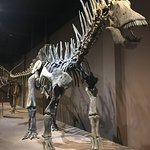 Bilde fra Natural Sciences Museum