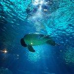 Photo of Aquarium Sea Life Paris Val D'Europe