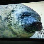 Foto de Aquarium de Biarritz