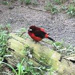 Foto de El Nispero Zoo and Botanical Garden