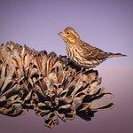 Great bird blind for morning light photography.