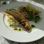 Sea Bass with blood orange salad