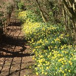 Woodland walk in Spring.