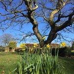 Spring daffodil.