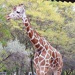Photo of Brookfield Zoo