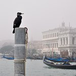 Photo of A Guide In Venice