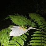 Foto de Villa Blanca Cloud Forest Hotel and Nature Reserve