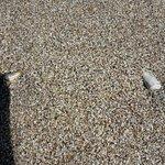 Playas con berberechos y caracoles varios