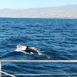 صورة فوتوغرافية لـ White Tenerife