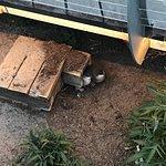 Phillip Island Nature Parks - Penguin Parade