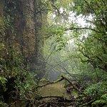 Foto de Waitomo Glowworm Caves