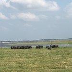 Photo de Kaudulla National Park