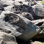 Weathering of the rocks near the blow hole