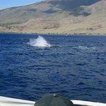 Foto de Lahaina Cruise Company