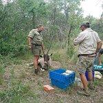 taking care of the injured animal