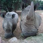 rhinos <3