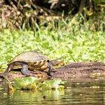 Photo of Tortuguero Wildlife Tour