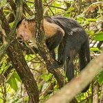 Foto Cahuita National Park