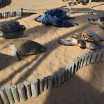 Reprodução de espécies de tartarugas