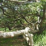 Historical huge trees everywhere