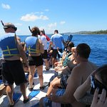Everyone was fitted with good masks and fins Life jackets were optional