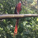 Just one of the many beautiful animals at the Belize Zoo - the Scarlet Macaw