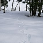 Our tracks down to the lake