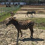 Photo of Ningbo Zoo