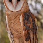Owl on Display with Handler