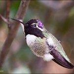 Hummingbird Resting in Open Area
