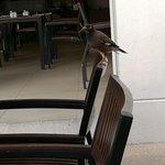 Photo of ibis Samui Bophut