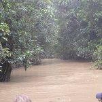 Photo de Sukau Rainforest Lodge