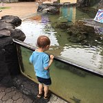 Foto de Maui Ocean Center