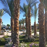 Ghazala Beach Hotel Photo