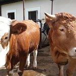 Photo de Agriturismo Vivinatura