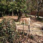 横滨Zoorasia动物园照片
