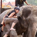 Learning how to leg mount an elephant