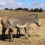 Photo of Reserve Africaine de Sigean