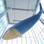 Photo of Canadian Museum of Nature