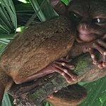 Philippine Tarsier and Wildlife Sanctuary Foto