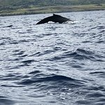 Photo de Ultimate Whale Watch & Snorkel