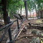Foto de Prison Island - Changuu Private Island