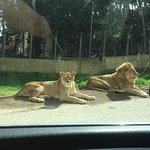 Foto de Reserve Africaine de Sigean